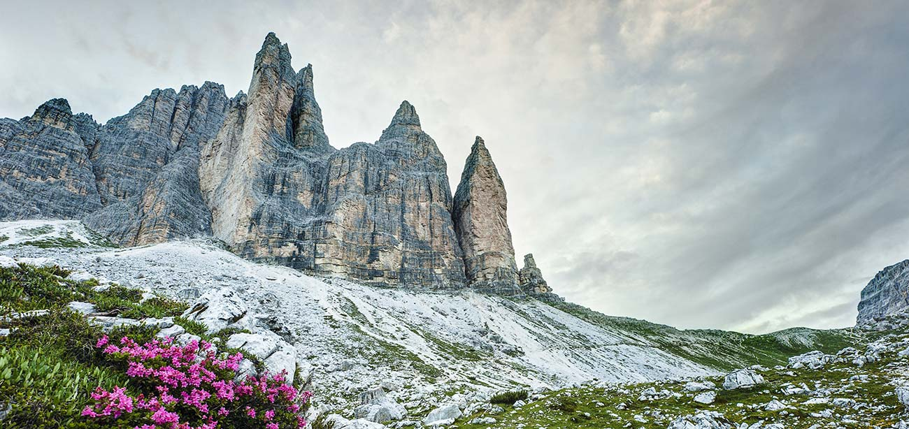 Pink flowers with Dolomites walls and grey clouds on the background