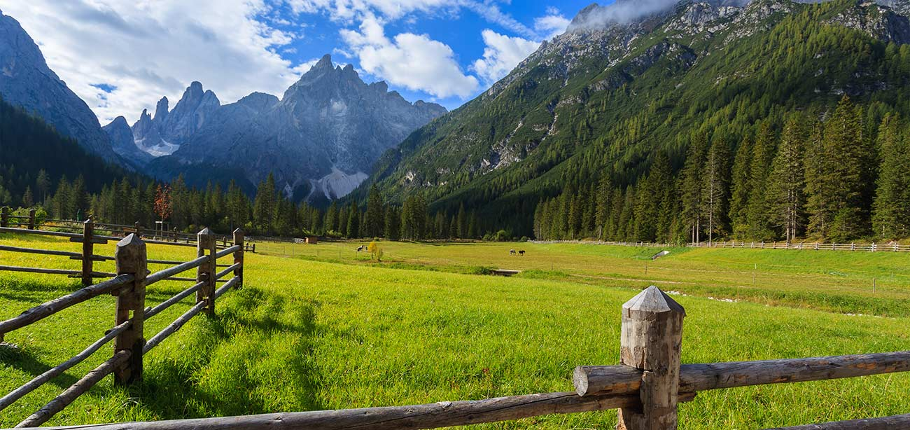 Very green meadow with wood fences, woods and mountains on the background